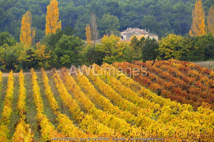 France, Vaucluse, regional park of Luberon, La Motte d'Aigues