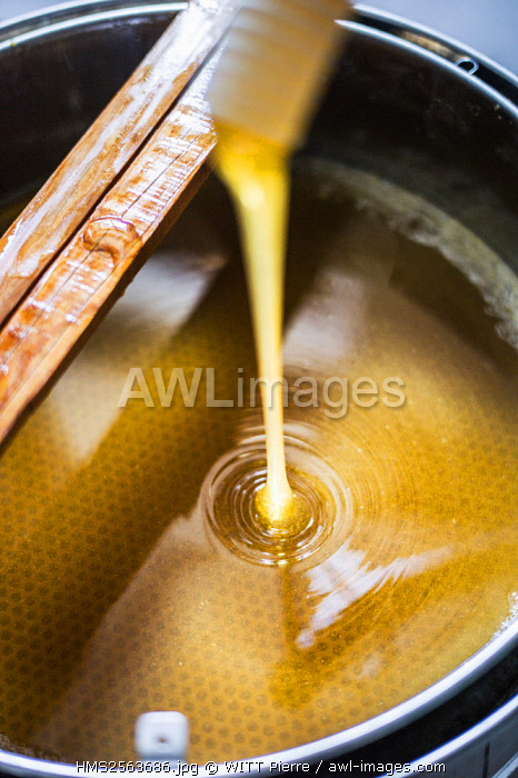 France, Hautes Alpes, Queyras Regional Natural Park, Aiguilles, Michel Collombon beekeeper, honey extraction