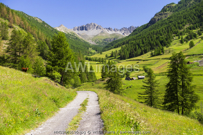 France, Hautes Alpes, Queyras Regional Natural Park, Chateau Ville Vieille, Souliers valley and hamlet (1816 m)