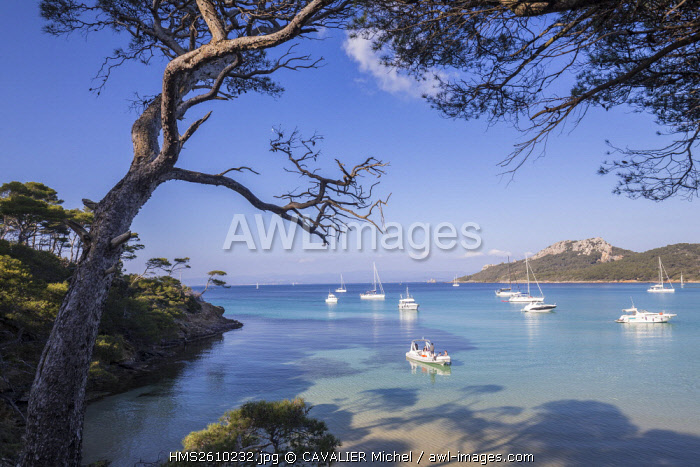 France, Var, Iles d'Hyeres, national park of Port-Cros, Island of Porquerolles, bay of Alycastre view of the Pointe du Pin, beach Notre Dame