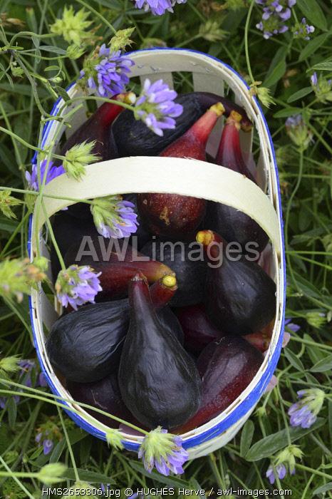 France, Vaucluse, Caromb, Le mas de Gouredon, black figs