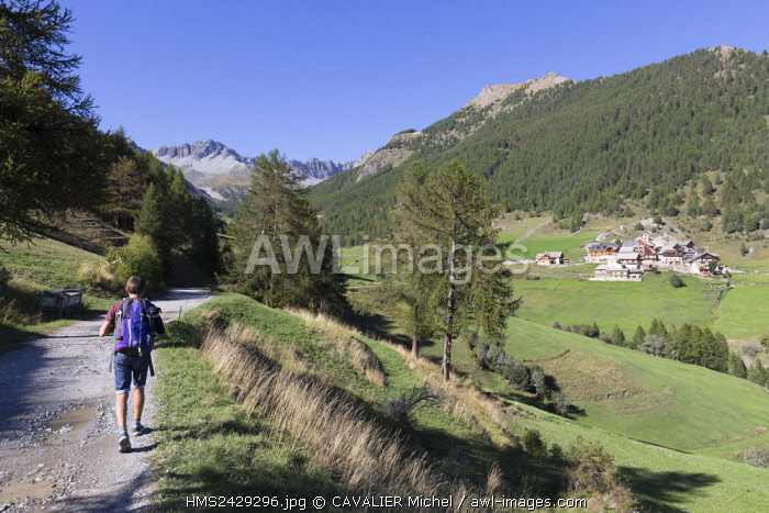 France, Hautes Alpes, Parc Naturel Regional du Queyras (Natural regional park of Queyras), hamlet of Souliers (1820m), gone hiking on the path of the lake of Roue