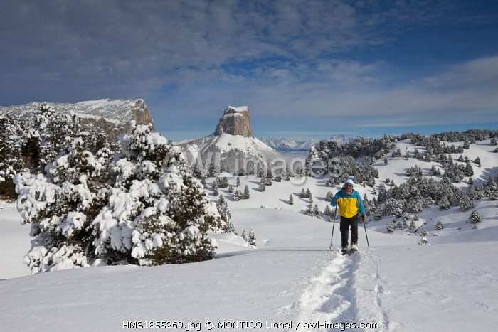France, Isere, Parc Naturel Regional du Vercors (Vercors Natural Regional Park), Mont Aiguille (2086 m) from the high plateaus of Vercors, man practicing snowshoeing