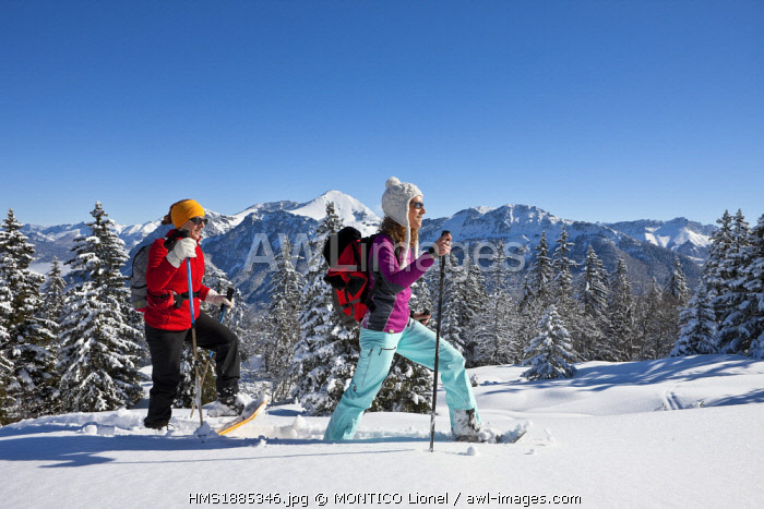 France, Savoie, Parc Naturel Regional du Massif des Bauges (Regional Natural Park of the Massif des Bauges), Domaine des Aillons Margeriaz, women practicing snowshoeing