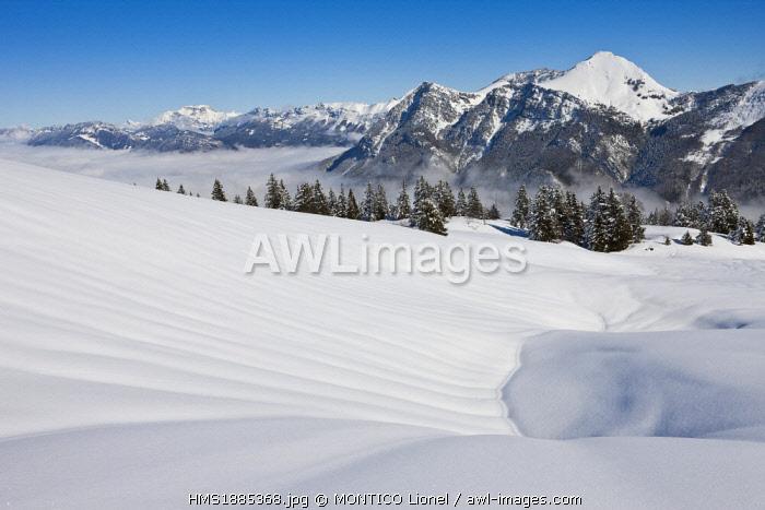 France, Savoie, Parc Naturel Regional du Massif des Bauges (Regional Natural Park of the Massif des Bauges), Domaine des Aillons Margeriaz