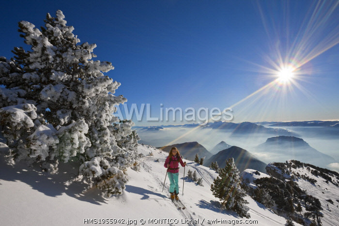 France, Isere, Parc naturel regional de la Chartreuse (Regional Natural Park of Chartreuse), woman practicing hiking skiing Chamechaude which is the highest peak in the Chartreuse Mountains (2082m) in the background the Parc naturel regional du Vercors (Regional Natural Park of Vercors)
