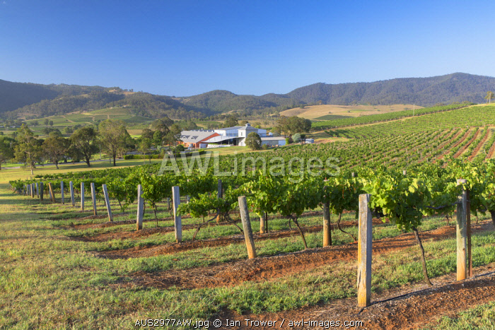 awl-images.com - Australia / Ben Ean Wine Estate, Hunter Valley, New South Wales, Australia