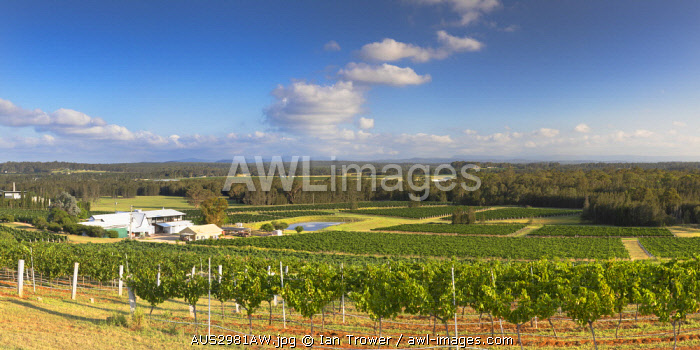awl-images.com - Australia / Lakes Folly Wine Estate, Hunter Valley, New South Wales, Australia
