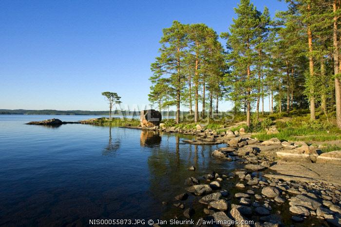 Lake and shoreline in evening light, Sweden, Sweden