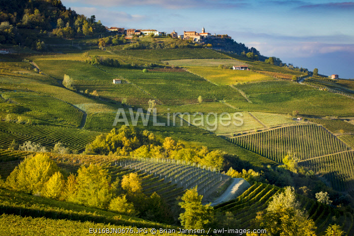 Autumn evening sunlight on the vineyards near Barolo with town of La Morra, Piemonte, Italy