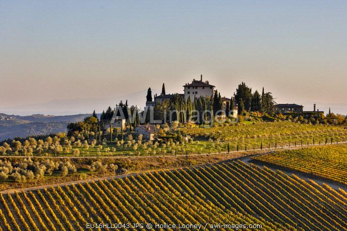 Italy, Tuscany, Vineyard