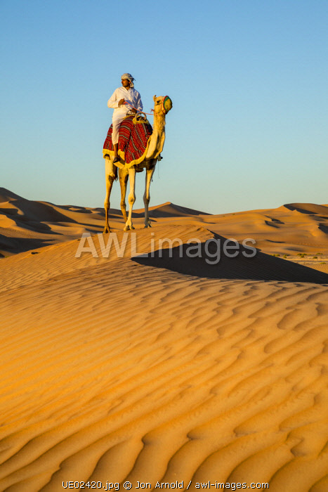 Camel in the Empty Quarter (Rub Al Khali), Abu Dhabi, United Arab Emirates (MR)