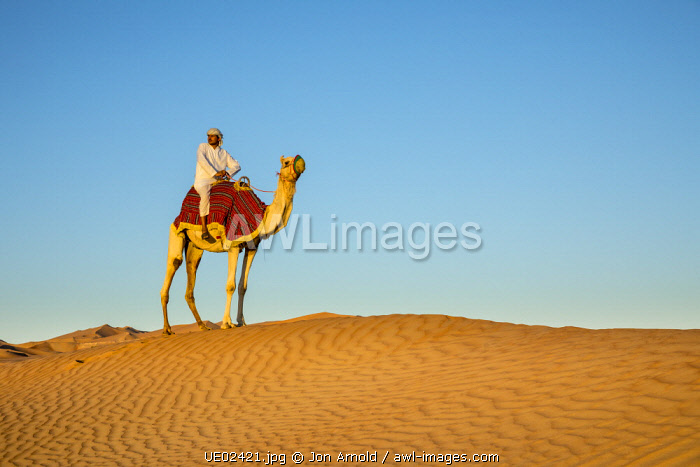 Camel in the Empty Quarter (Rub Al Khali), Abu Dhabi, United Arab Emirates