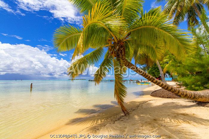 Les Tipaniers, Tiahura, Moorea, French Polynesia