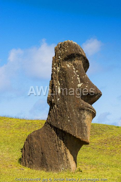 Moai heads at the nursery, Easter Island. Polynesia, Chile