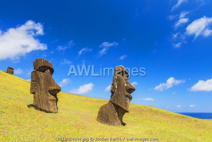 Moai heads at the nursery, Easter Island. Polynesia, Chile