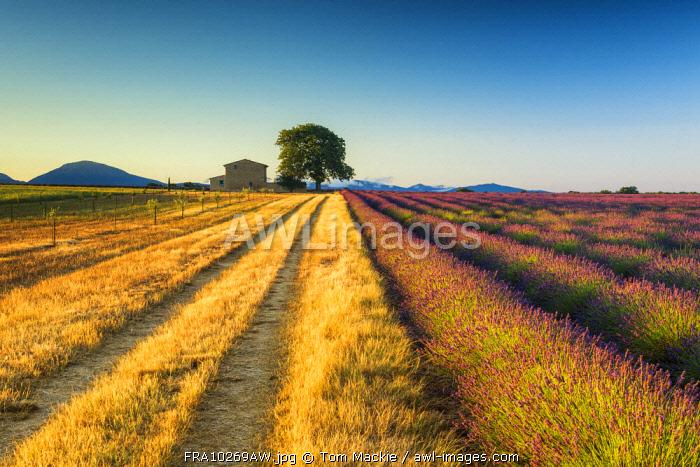 Track Leading to Villa, Provence, France