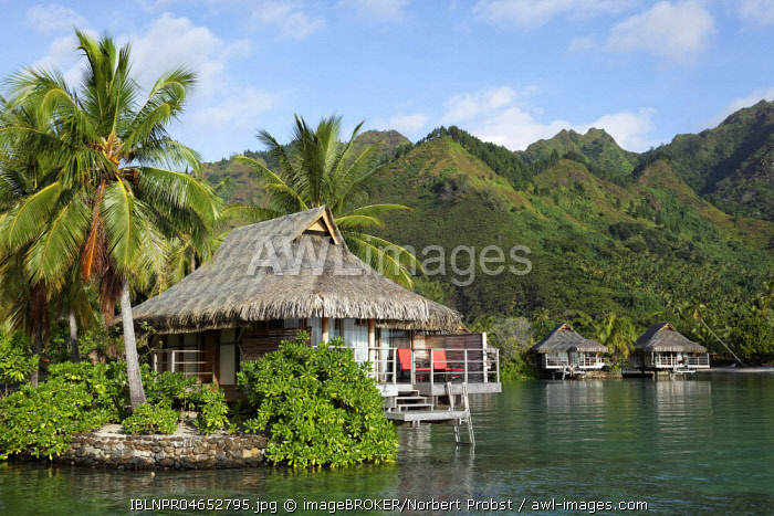 Bungalows by the sea with palm trees in front of green hills, Luxury Hotel, Interconti Resort, Moorea, Society Islands, Leeward Islands, Pacific Ocean, French Polynesia, Oceania