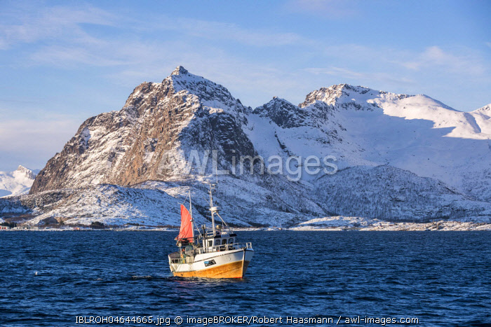 Traditional fishing boat catching the net, snowy mountains in the background, Lofoten, Norway, Europe