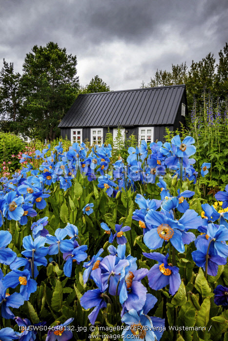 Black timber house surrounded by flowers in the Botanical Gardens of Akureyri, Iceland, Europe