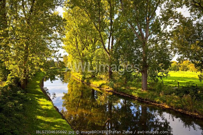 Trees at the Niers, near Weeze, Lower Rhine, North Rhine-Westphalia, Germany, Europe