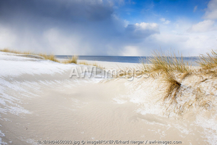 Dunes with beach grass and snow, North Sea, Langeoog, East Frisia, Lower Saxony, Germany, Europe