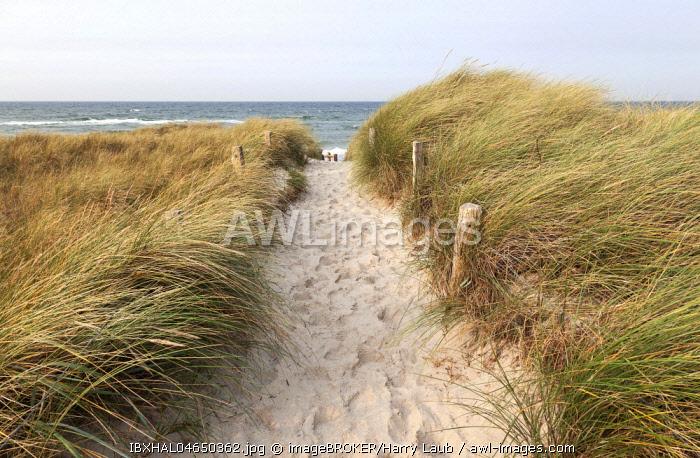 Way to the beach, European Marram Grass (Ammophila arenaria), Darsser Ort, Fischland-Darss-Zingst, Western Pomerania Lagoon Area National Park, Baltic Sea coast, Mecklenburg-Western Pomerania, Germany, Europe