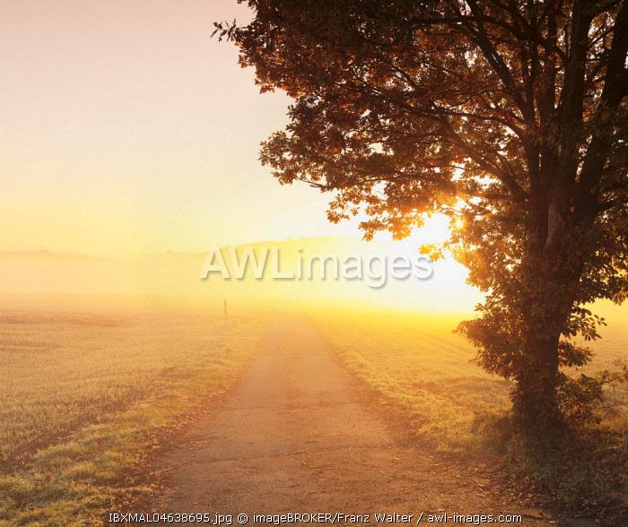 Way between farmland with morning mist at sunrise, Hunsruck, Rhineland-Palatinate, Germany, Europe