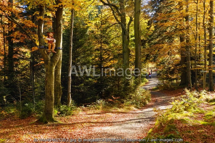 Hiking trail to the Brotjacklriegel, region Sonnenwald, Bavarian Forest, Lower Bavaria, Bavaria, Germany, Europe