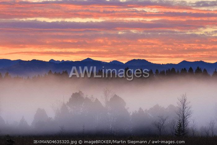 Alpine foothills landscape at morning fog, morning atmosphere, Kirchseemoor near Sachsenkam, Toezer Land, Upper Bavaria, Bavaria, Germany, Europe
