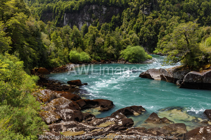 Turquoise mountain river Futalefu flows through dense vegetation, National Park Los Alerces, Region de los Lagos, Patagonia, Chile, South America