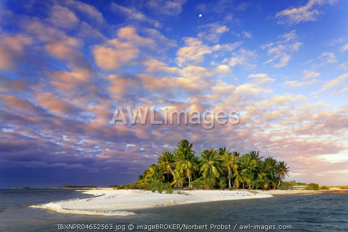 Lonely Island, Beach with Palms, Clouds, Sunset, Tikehau Atoll, Tuamotu Archipelago, Society Islands, Windward Islands, French Polynesia, Oceania