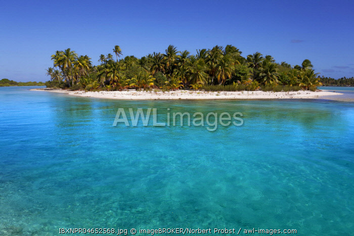 Solitary island in lagoon, beach with palm trees, turquoise water, Tikehau Atoll, Tuamotu archipelago, society islands, Windward Islands, French Polynesia, Oceania