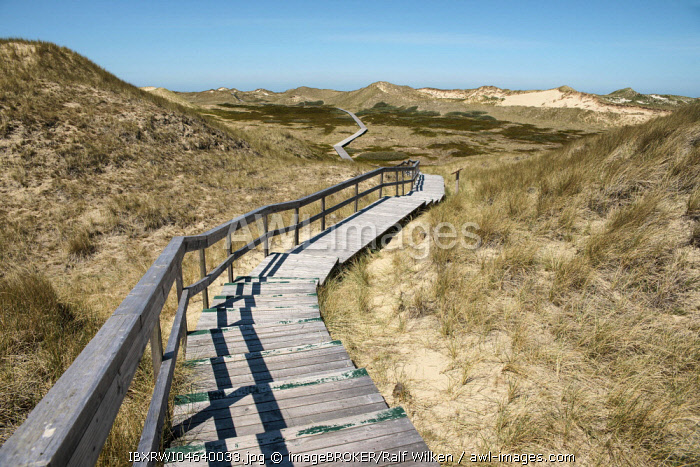 Wooden plank path through the dunes of Amrum, North Frisia, Schleswig-Holstein, Germany, Europe
