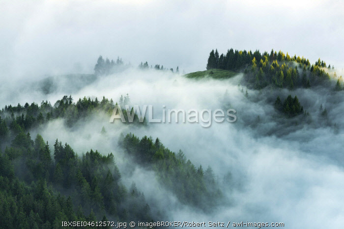 Mountain forest with early morning fog, Wilder Kaiser, Scheffau, Tyrol, Austria, Europe