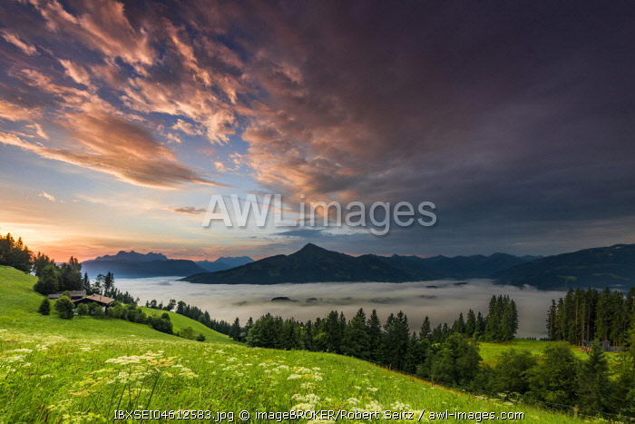 Mountain meadow with mountain top with sea of fog at sunrise, Wilder Kaiser, Scheffau, Tyrol, Austria, Europe