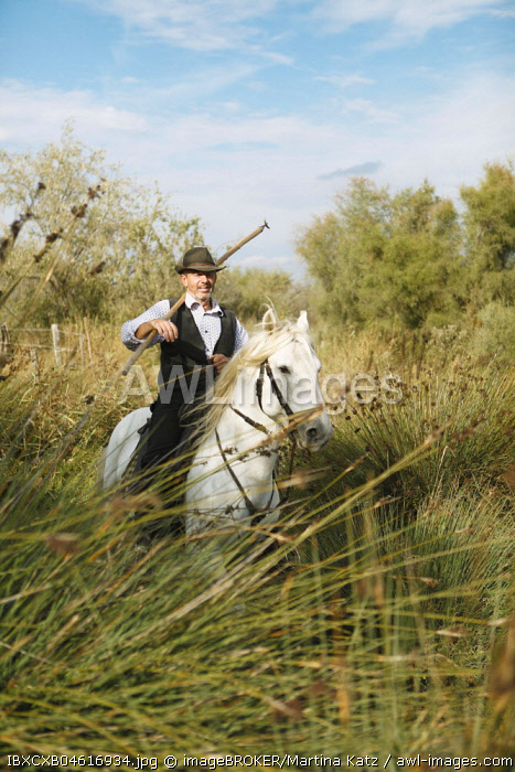 Gardian or traditional bull herder in typical working clothes galloping on a Camargue horse, Le Grau-du-Roi, Camargue, France, Europe