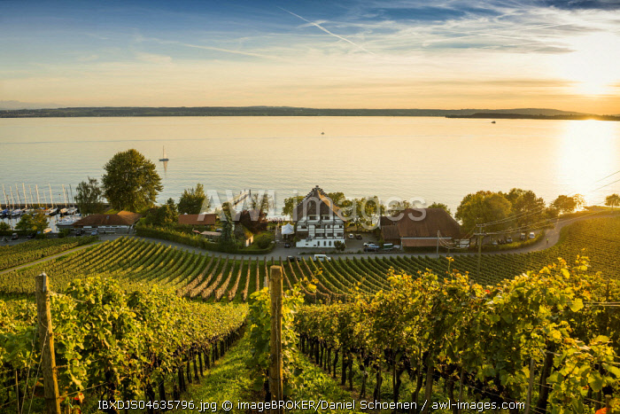 View of Lake Constance and vineyards, sunset, Meersburg, Baden-Wurttemberg, Germany, Europe