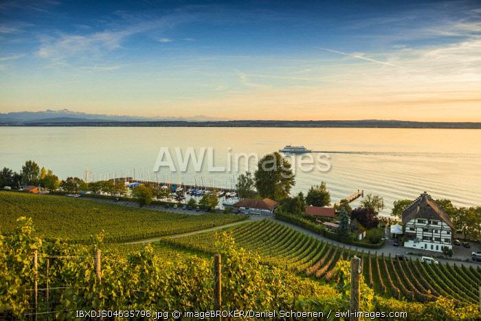 View of Lake Constance and vineyards, Meersburg, Baden-Wurttemberg, Germany, Europe