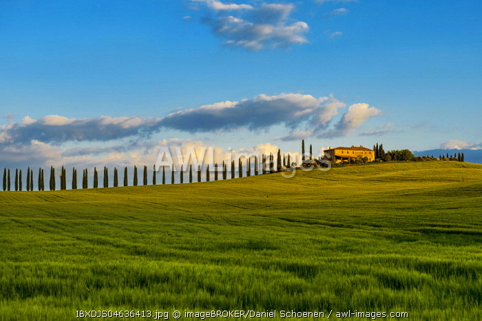 Tuscany landscape with cypresses and farmstead, sunset, San Quirico d' Orcia, Val d' Orcia, Tuscany, Italy, Europe