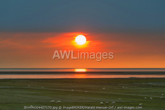 Sunset over the Wadden Sea, Schafweide in front, Schleswig-Holstein Wadden Sea National Park, UNESCO World Heritage Site, Westerhever, Schleswig-Holstein, Germany, Europe