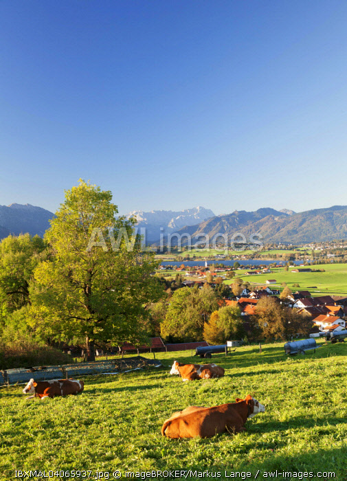 View from Aidlinger Heights across Riedsee lake to the Wetterstein Range, Upper Bavaria, Bavaria, Germany, Europe