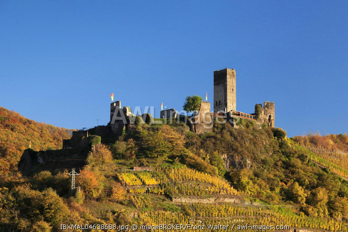 Ruins of Metternich Castle with vineyard, Moselle, Rhineland-Palatinate, Germany, Europe