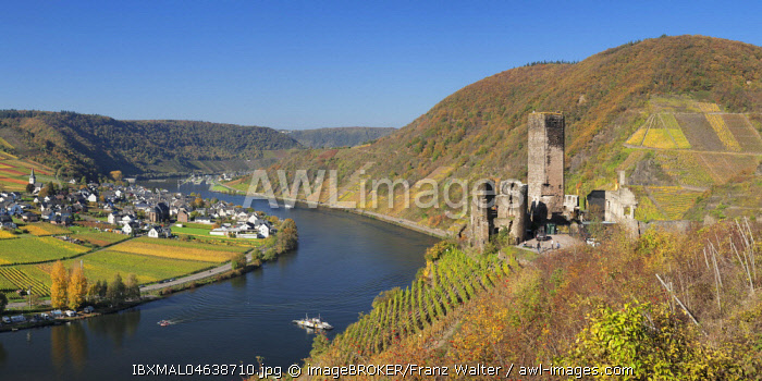 Ruins of Metternich Castle with vineyard, Beilstein, Moselle, Rhineland-Palatinate, Germany, Europe