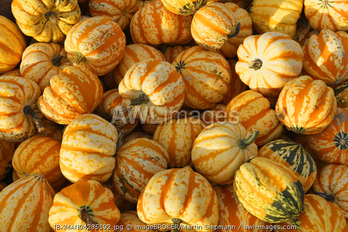 Microwave pumpkins, Bavaria, Germany, Europe