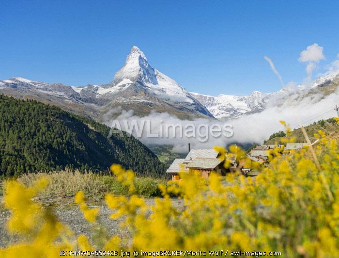 Yellow flowers, snow-covered Matterhorn, Old wooden houses, mountain village Eggen, Valais, Switzerland, Europe