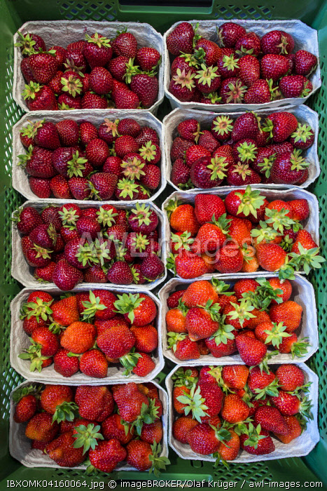 Fresh strawberries in punnets, Baden-Wurttemberg, Germany, Europe