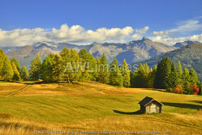 Cultural landscape with larch trees in autumn, Zillertal Alps at the back, Egger Mahder, Obernberg am Brenner, Tyrol, Austria, Europe