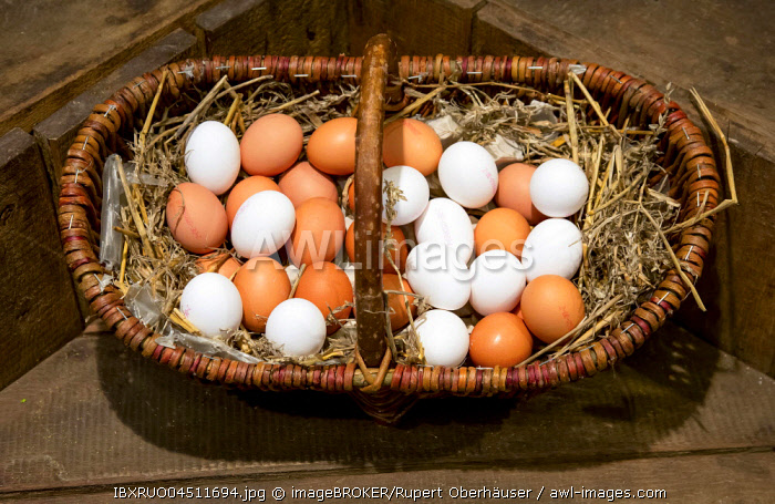 Brown and white eggs lying on straw in wicker basket for sale, Herten, Ruhr district, North Rhine-Westphalia, Germany, Europe