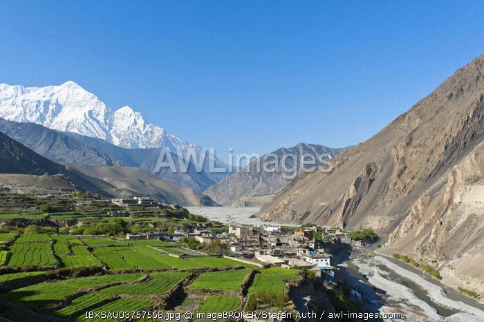 Settlement on the Kali Gandaki River, snow-capped Mt Nilgiri North, 7061 m, at back, Kagbeni, Lower Mustang, Lo, Nepal, Asia